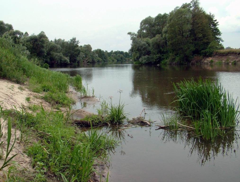 Bug – przykład nieuregulowanych rzek, mających wielkie znaczenie dla zachowania różnorodności biologicznej. Fot. KrzysztofKujawa