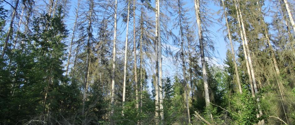 Martwe (i żywe)drzewa