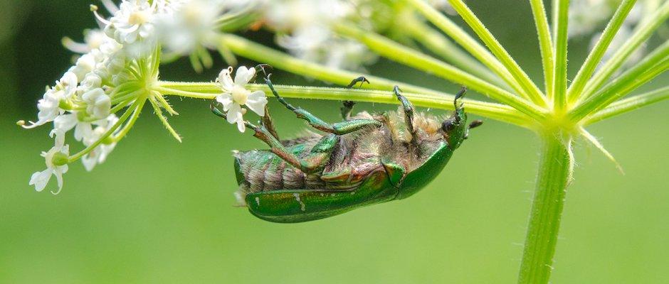 Pestycydy Trzymajmy Się Faktów Nauka Dla Przyrody