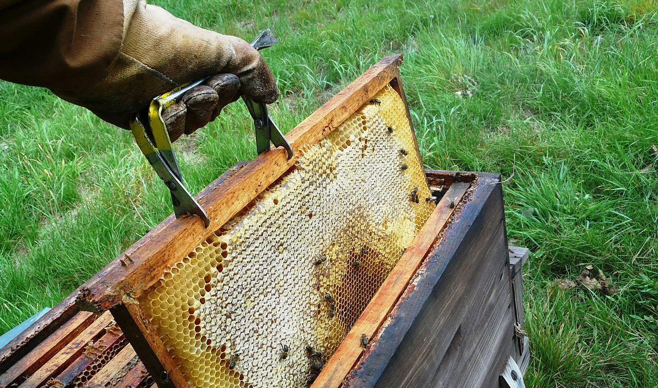 abeilles_et_ruches_02