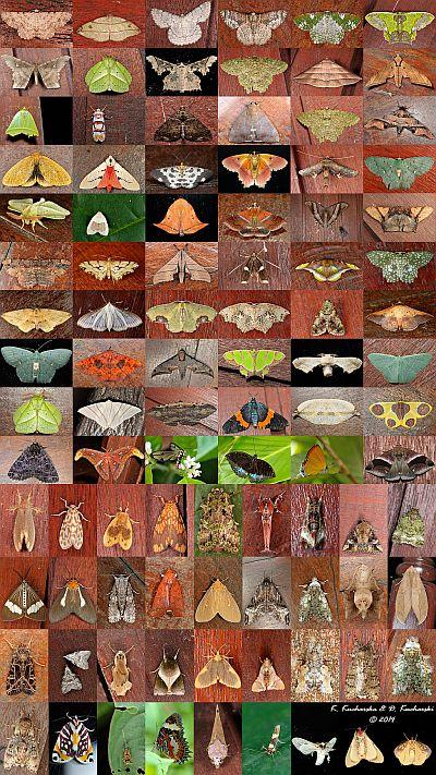 Biodiversity K&DK — kopia (2)