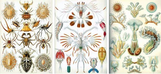 Ernst Haeckel 3_kopia