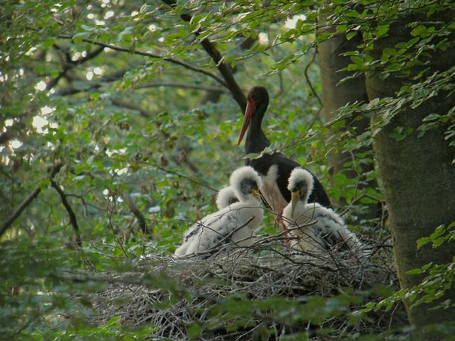 dojrzałe czarne pisklęta www.big pussies.com