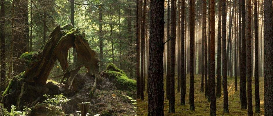 Różne oblicza lasu.