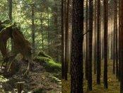 Różne oblicza lasu. Fot. K. Kujawa