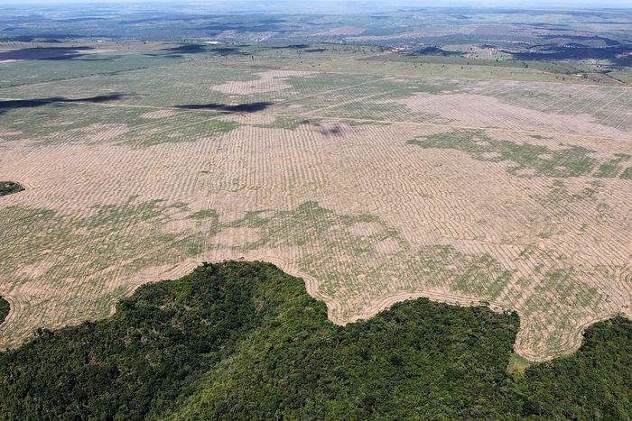 Wylesianie. Puszcza Amazońska w Brazylii. Fot. Felipe Werneck - Ascom/Ibama